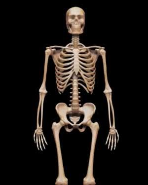 скачать скелет игру - фото 6
